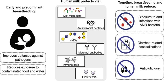 Schéma qui décrit l'impact et les bénéfice de l'allaitement vis à vis des bactéries